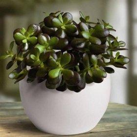 Почему комнатные растения — это отличная идея для подарка?